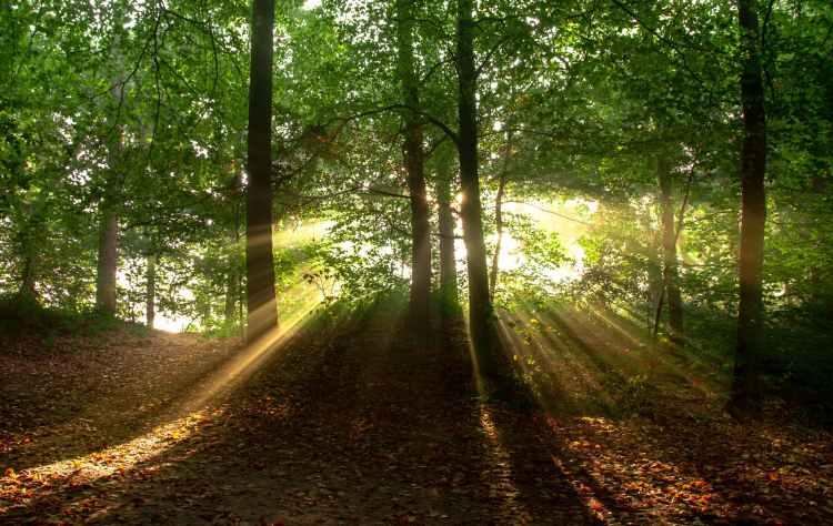 landscape nature sun forest